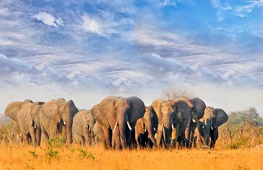 11 Elephant Found Dead in Hwange
